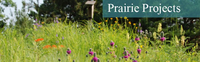 Prairie-Projects