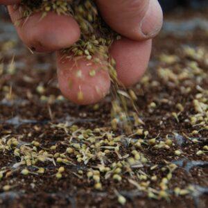 seeding-hand2