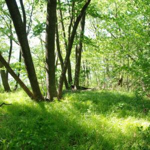 Pennsedge woodland