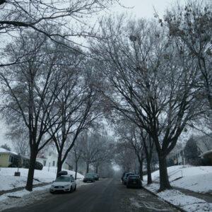 winter city trees1