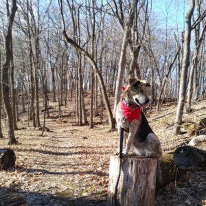 Maya exploring Wood Rill