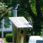 birds feeding young bugs1